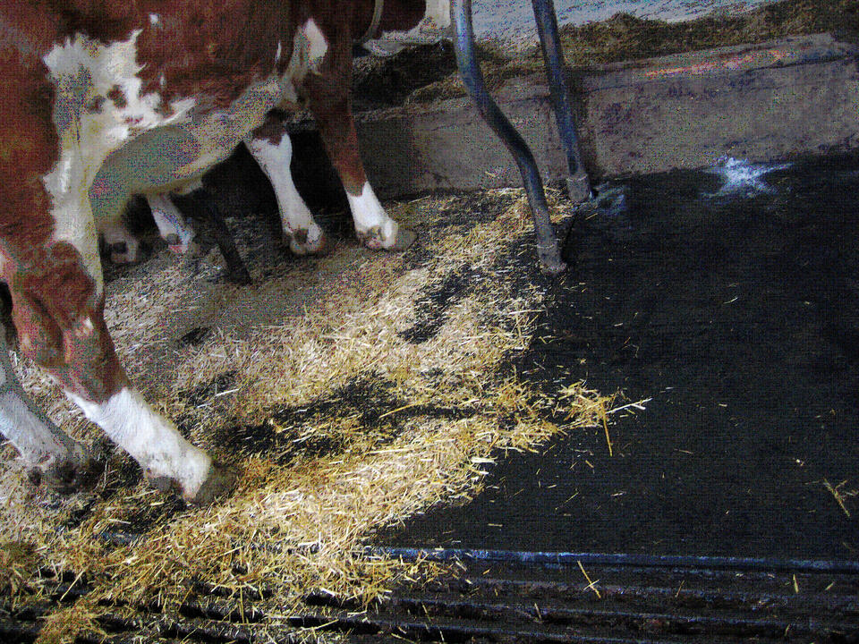 繋ぎ牛舎用牛床マット レンタ