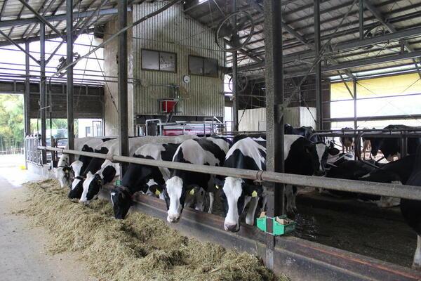 搾乳ロボットがいてくれたお陰で、酪農を続けることができました。