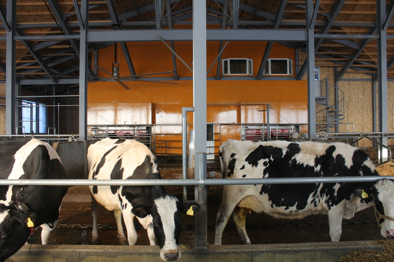 Tkf_barn_in_10.JPG
